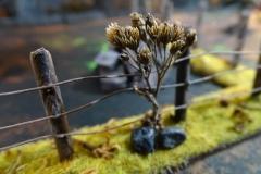 minisdotdaemonflowerdotcom-fences-hedges-0006