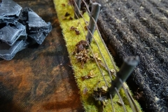 minisdotdaemonflowerdotcom-fences-hedges-0015