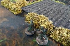 minisdotdaemonflowerdotcom-fences-hedges-0021